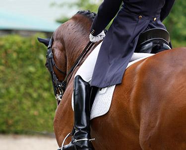 Equestrian Awards