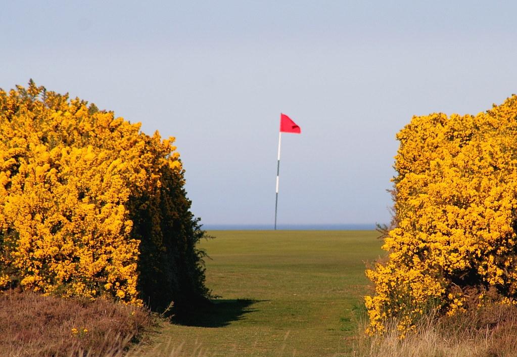 Royal Dornoch golf course - A green between two ferns